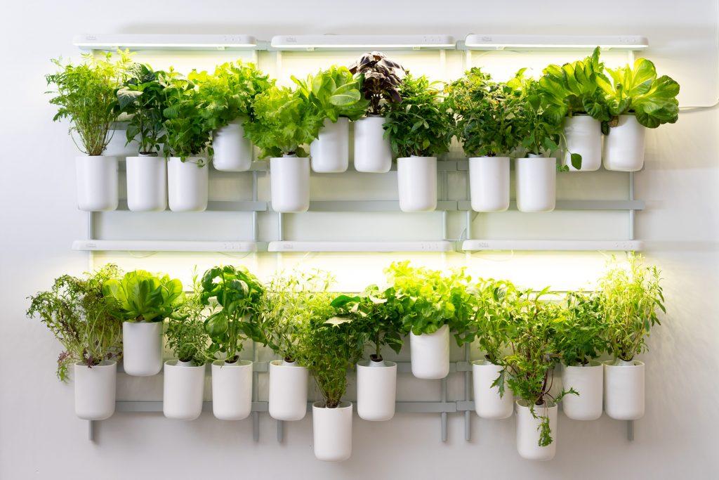 Modulo Smart Gardening System fürs Indoor, vertikale Gärtnern