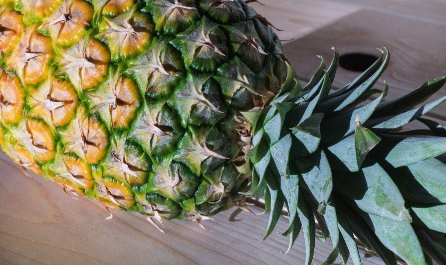Ananas selber ziehen: So einfach wird's gemacht!