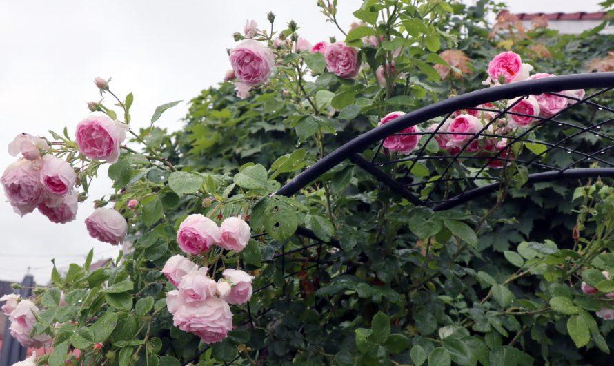 Trendige Gartendeko: So wird der Außenbereich zum echten Blickfang