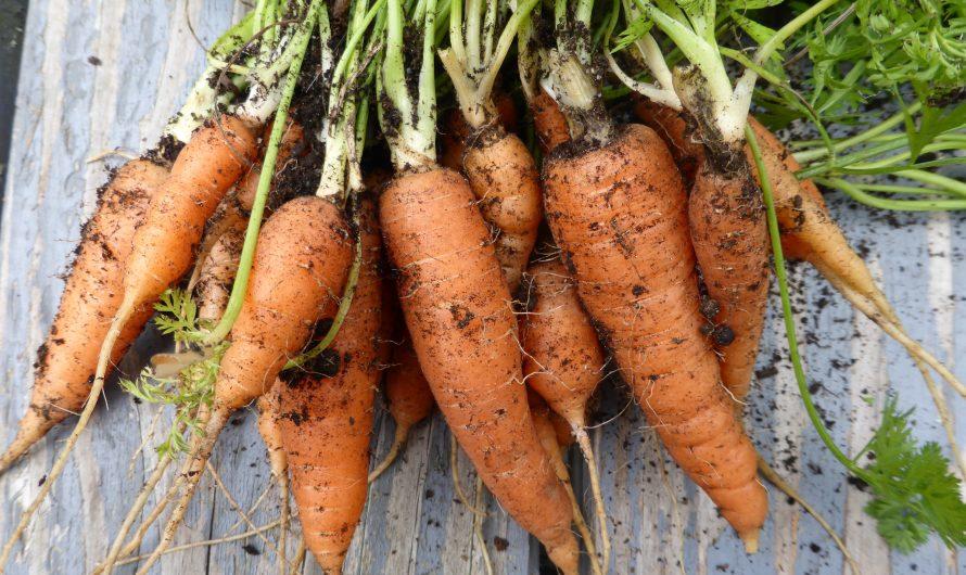 Das erste Gemüsebeet anlegen: Einfach paradiesisch!