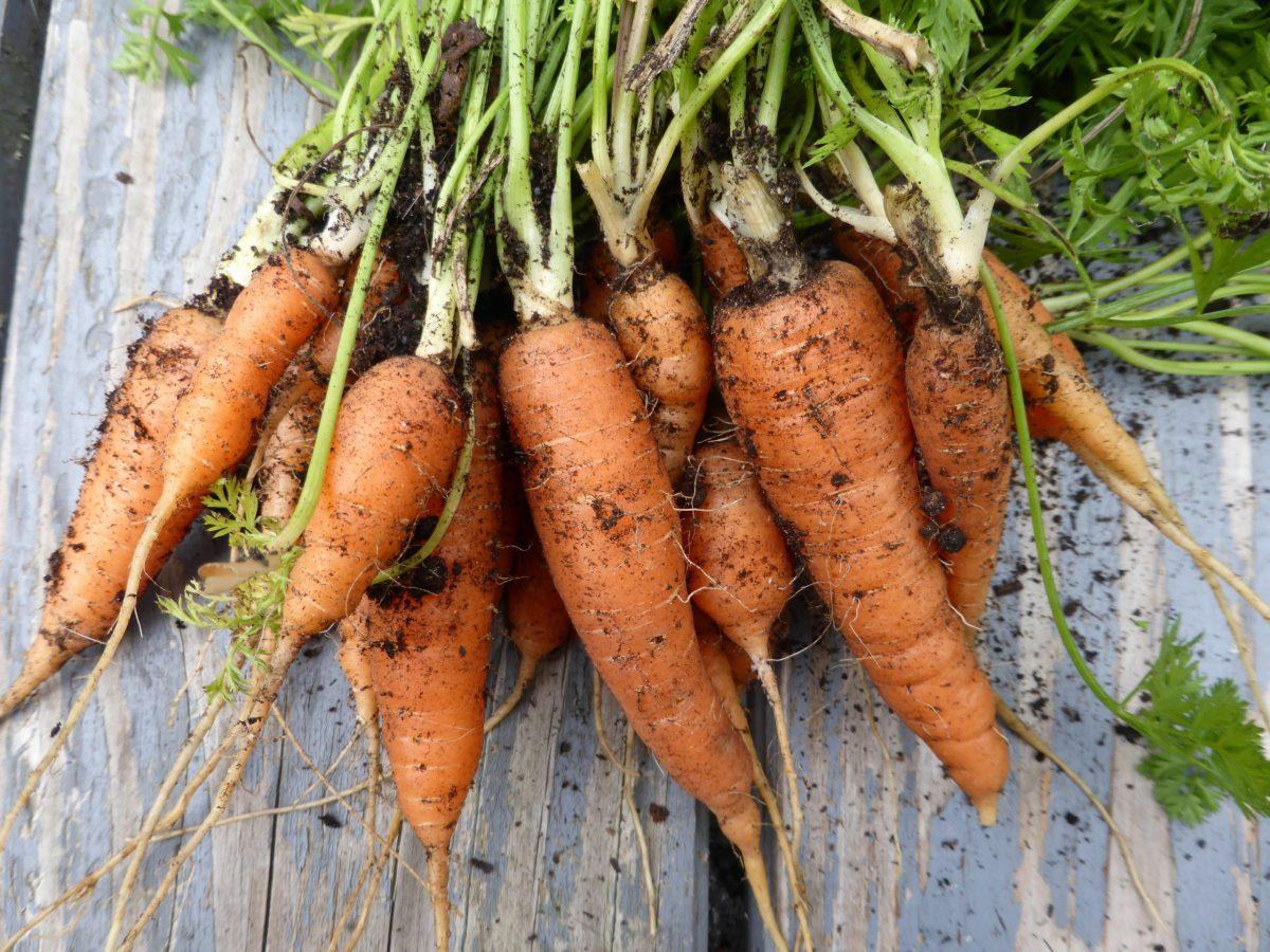 Gemüsebeet planen, anlegen, welches Gemüse und wie bepflanze ich es?