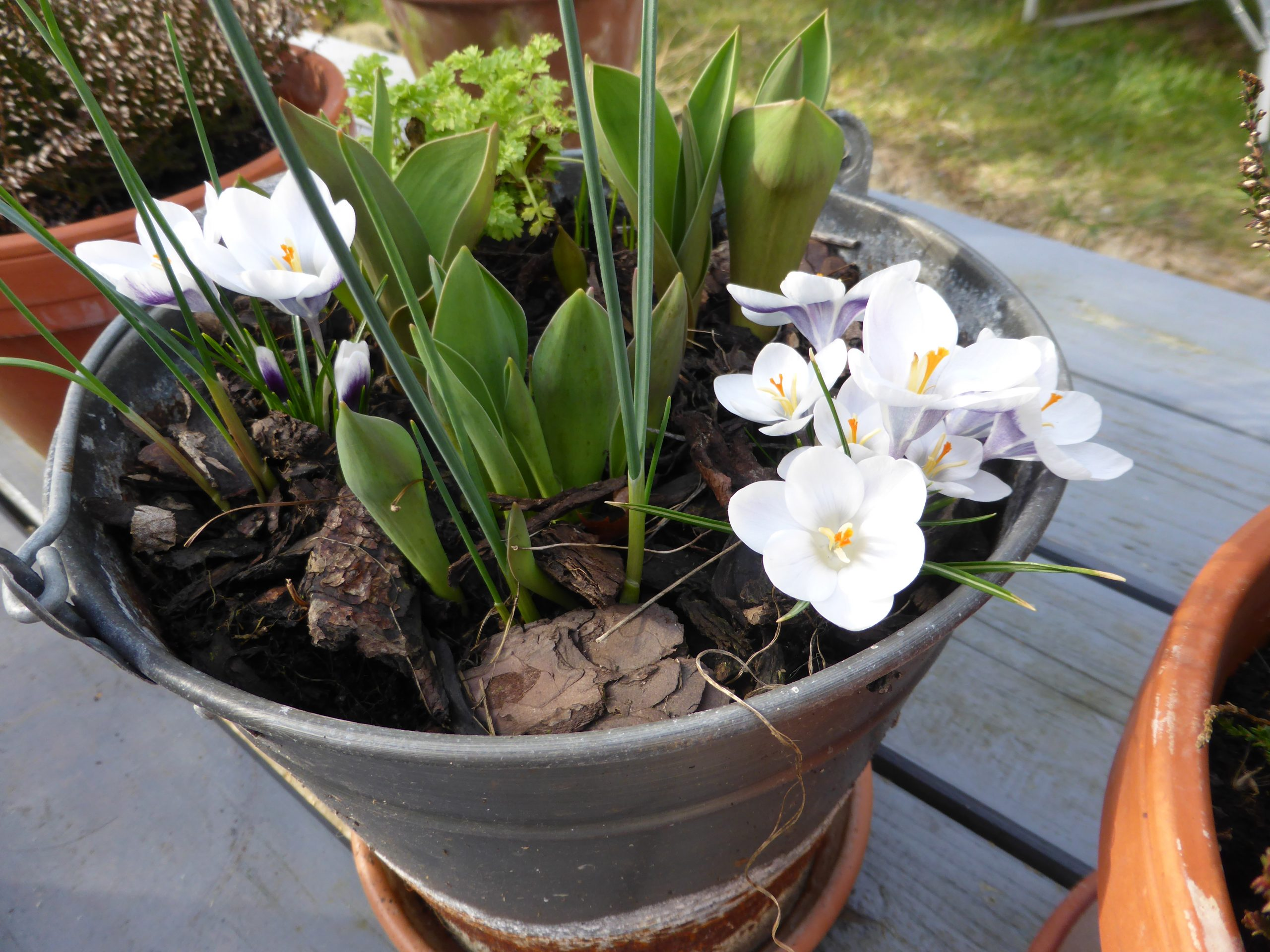 Blumenzwiebel pflanzen
