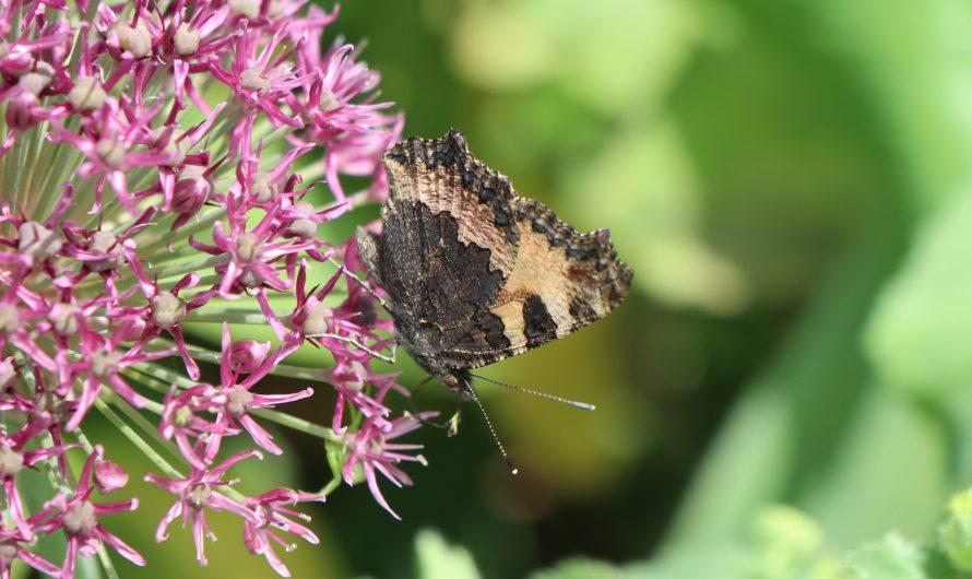 Blumenzwiebeln im Garten und Topf: So wichtig für die Artenvielfalt